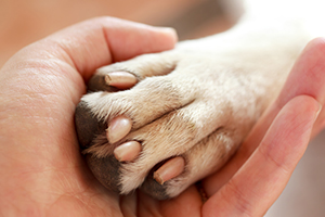 Other-Therapies-Paw