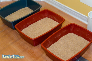 multiple litter boxes